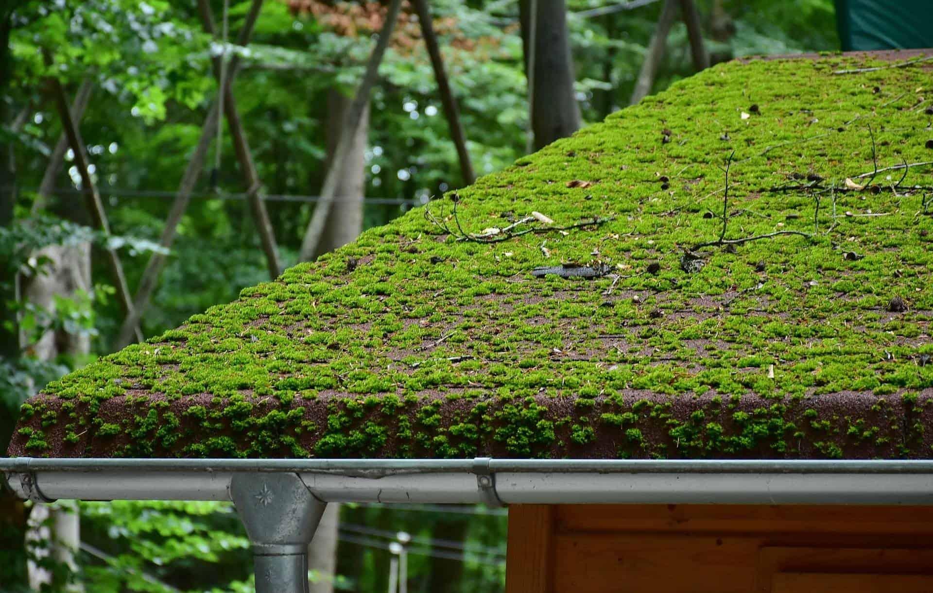 toit vert plein de mousse